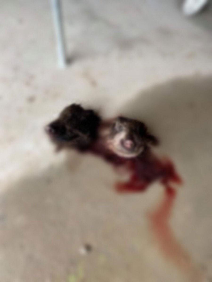 متطرفون يضعون رأس خنزير داخل أحد مساجد فرنسا (صور)